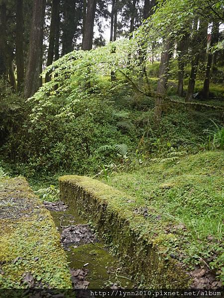 阿里山-森林38