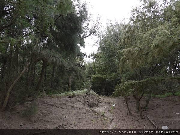 梧棲觀光漁港 小樹林