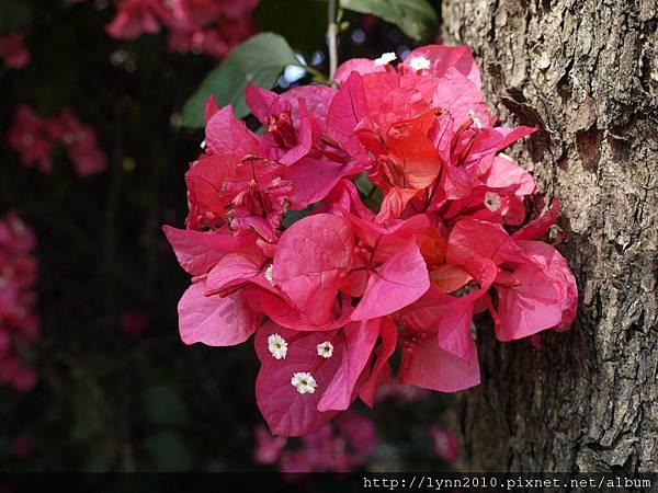 路旁的花兒02