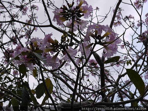 路旁的花兒08