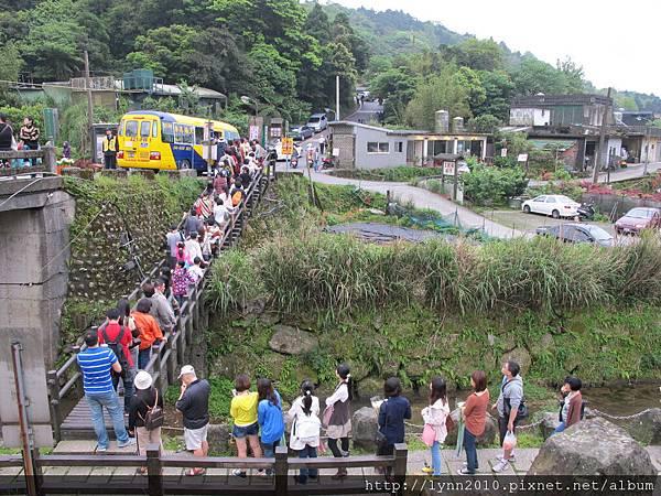 陽明山竹子湖(海芋)-人山人海在等交通車