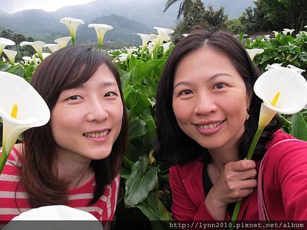 陽明山竹子湖-海芋05 就是愛自拍