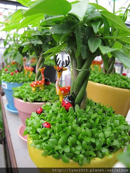 陽明山竹子湖-多可愛的小鹿盆栽