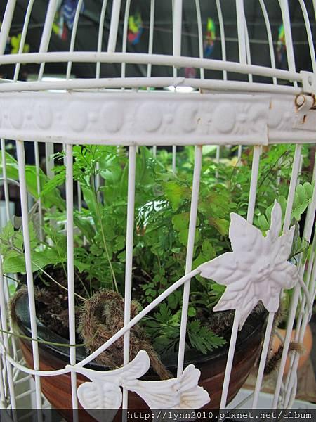 陽明山竹子湖-關在鳥籠中的花草