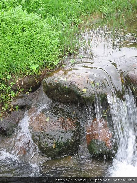 陽明山竹子湖-小溪流