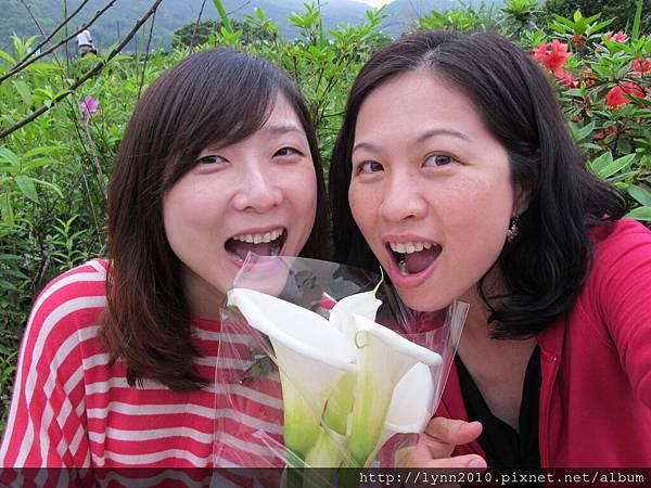 陽明山竹子湖-新鮮海芋