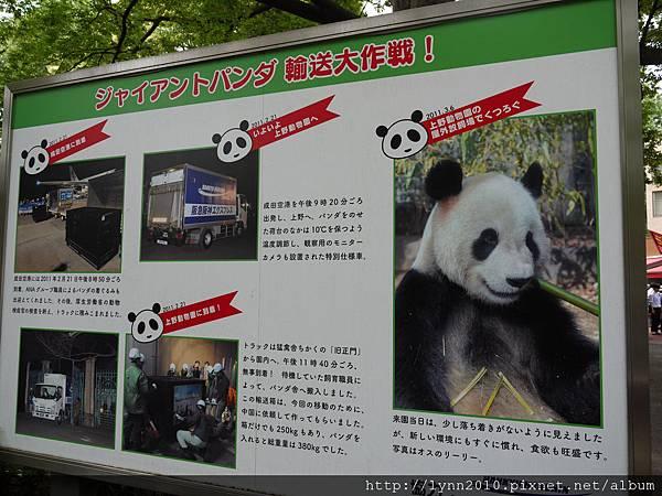 東京-Day 2-上野動物園 (11)