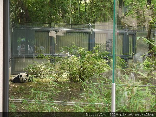 東京-Day 2-上野動物園 (12)