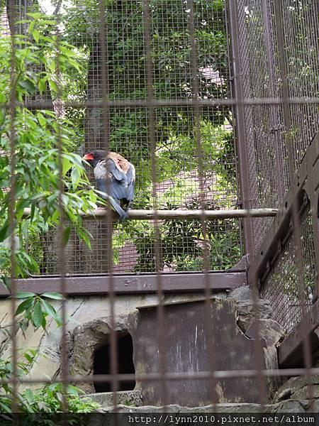 東京-Day 2-上野動物園 (14)