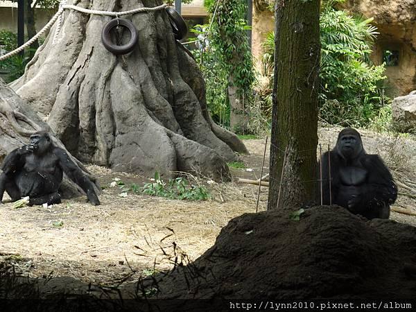 東京-Day 2-上野動物園 (18)