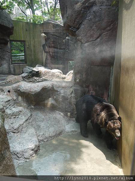 東京-Day 2-上野動物園 (31)