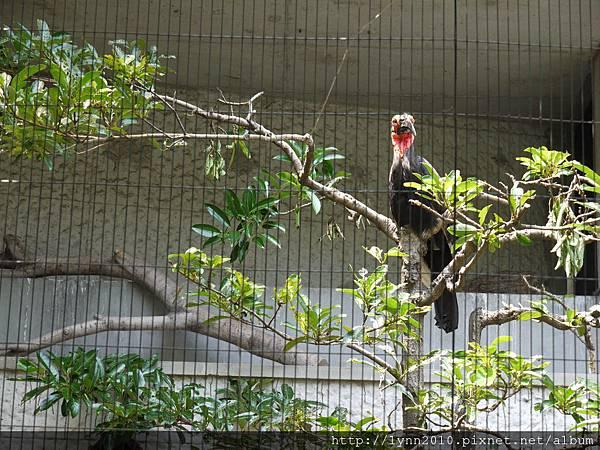 東京-Day 2-上野動物園 (43)