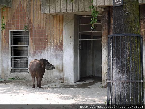 東京-Day 2-上野動物園 (44)
