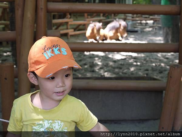 東京-Day 2-上野動物園 (56)