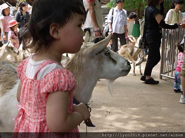 東京-Day 2-上野動物園 (64)