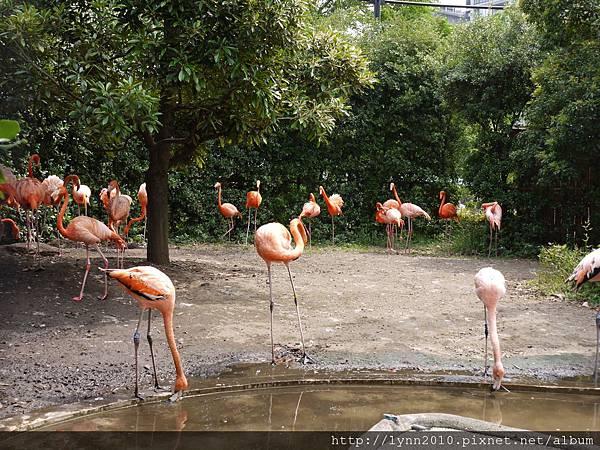 東京-Day 2-上野動物園 (74)