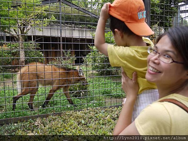 東京-Day 2-上野動物園 (80) 三隻小豬故事中的大野狼