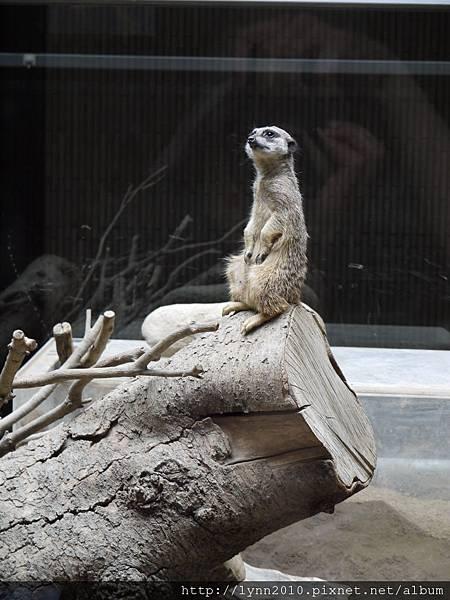 東京-Day 2-上野動物園 (85)