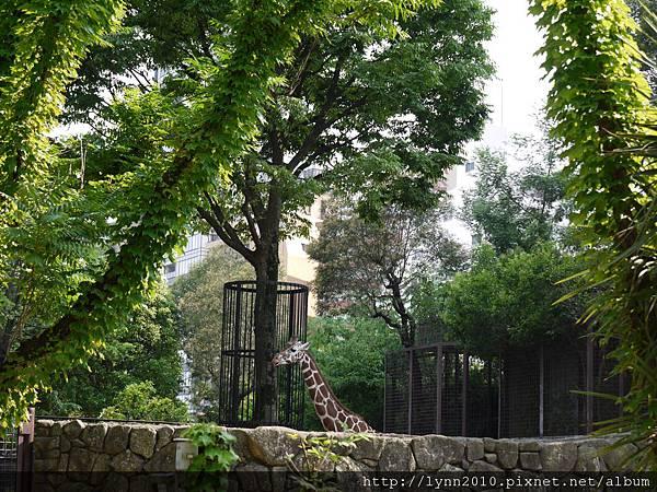 東京-Day 2-上野動物園 (92)