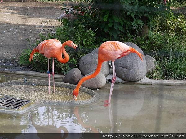 東京-Day 2-上野動物園 (100)