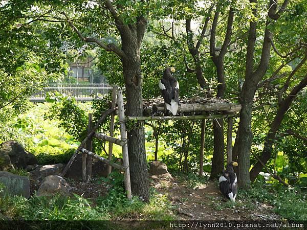 東京-Day 2-上野動物園 (104)
