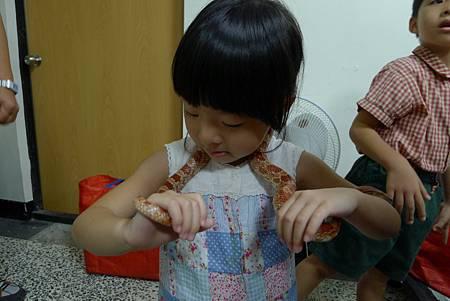 英文課+動物課玉米蛇+刺蝟+Updownaround學習單 087