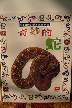 英文課+動物課玉米蛇+刺蝟+Updownaround學習單 445-1