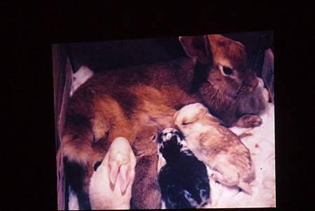 動物課兔子+紫蛇目寄生+麵包蟲繭 229