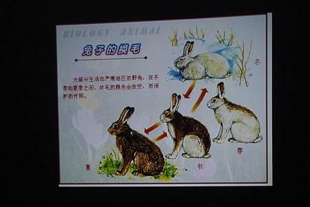 動物課兔子+紫蛇目寄生+麵包蟲繭 203