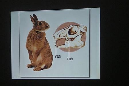 動物課兔子+紫蛇目寄生+麵包蟲繭 171