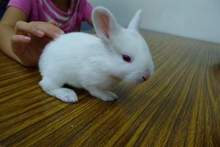 動物課兔子+紫蛇目寄生+麵包蟲繭 052