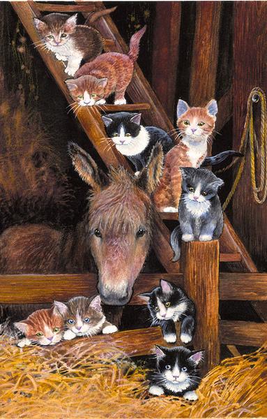 Barn Cats_SunsOut