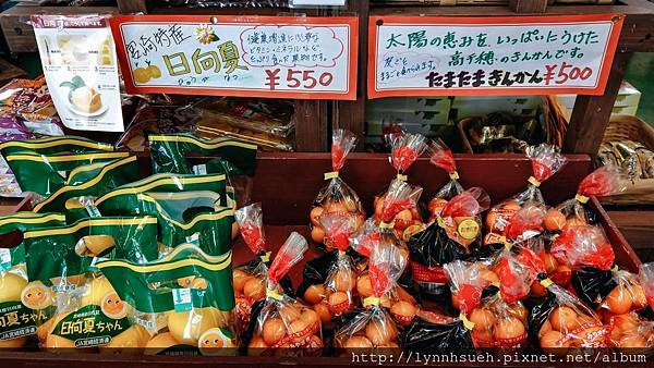 宮崎農特產-日向夏及金柑