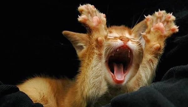 50歲葉子楣 小S被賞耳光 停車用手抬 林予晞秘遊 母親節禮物 劉伊心結婚 朴槿惠罪名 風衣外套 吃吃的愛 星巴克 通靈少女第三集 羅惠美 地震 Isaiah Thomas 勇士 曾之喬 麻衣 胡同大媽