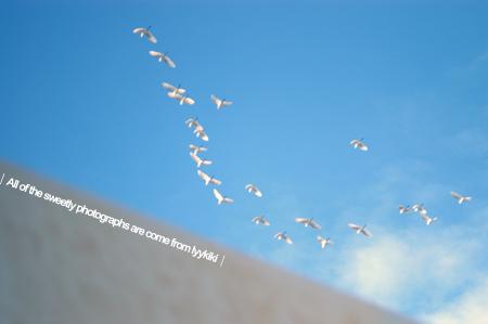 fly-01.jpg