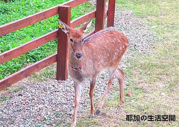 IMG_4859_副本