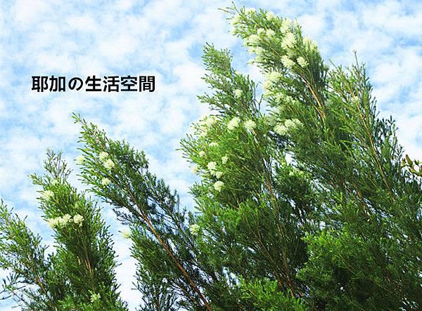 IMG_5685_副本