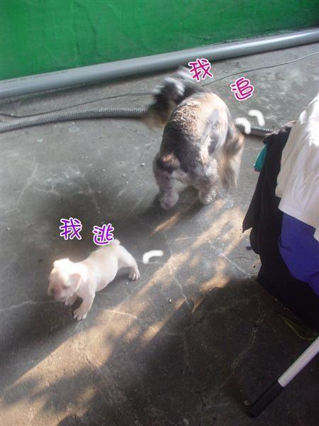 味噌BB第一週 (20).JPG