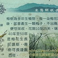 經國梅園5.jpg
