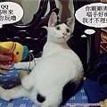 喵言喵語4.JPG