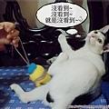 喵言喵語5.JPG