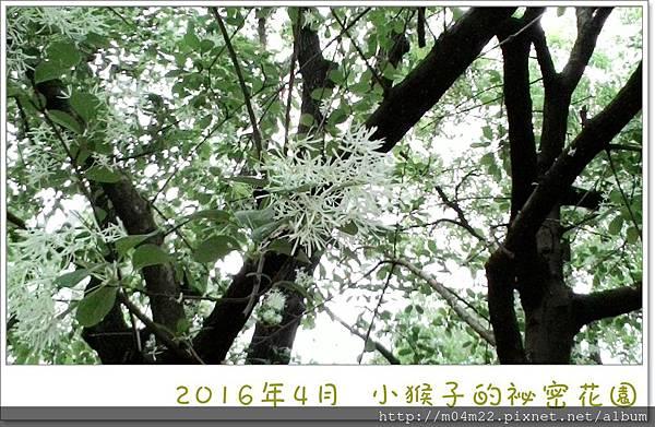 P_20160412_091550_NT.jpg