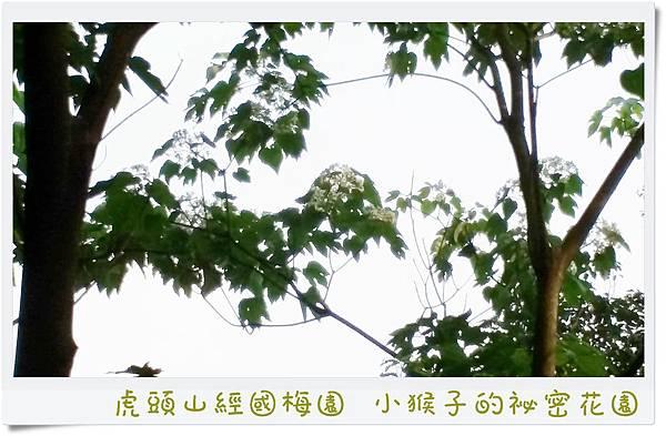 20160502_155941.jpg