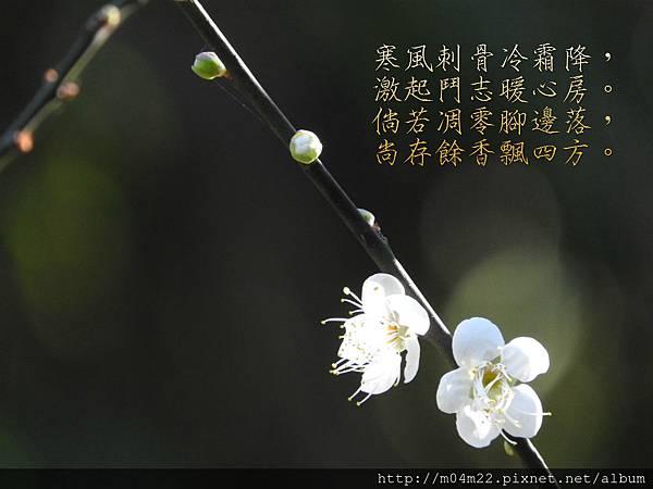 DSCN1079_meitu_1.jpg
