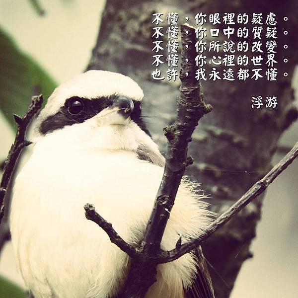 DSCN4764_meitu_7.jpg
