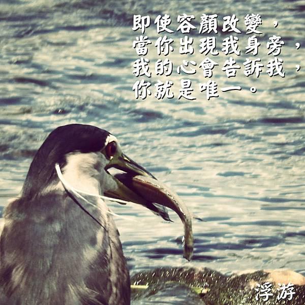 DSCN9146_meitu_1.jpg