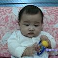 2008-12-12小猴子 011.JPG