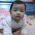 2008-12-26小猴子 012.JPG