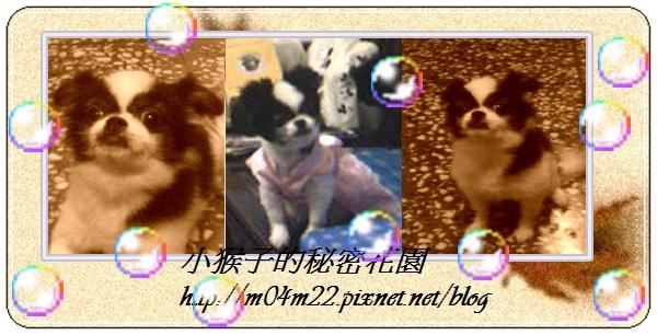 花草背景圖5jpg.jpg