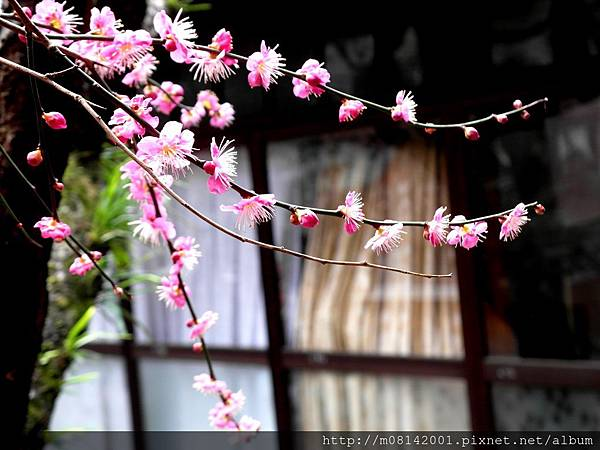 日本の背包練習曲14